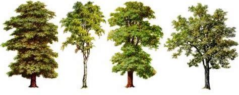 meaning of trees meaning of trees