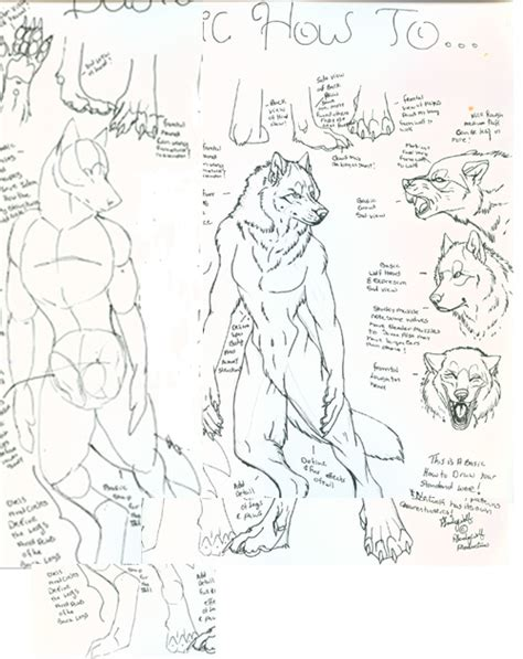 werewolf drawing tutorial how to draw werewolves by pladywolf