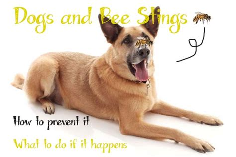 bee stings on dogs bee careful everything you need to about bee
