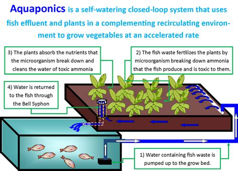 Aquaponic Grow Beds What Is Aquaponics And How Does It Work And Why