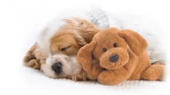 Small House Dogs Cute Dogs Puppies