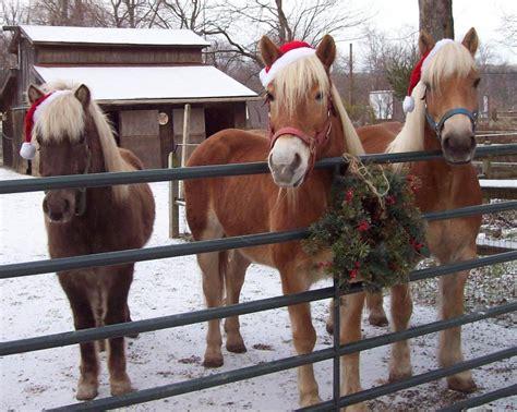 saturday  phoblog day  pre holiday extravaganza horse  man