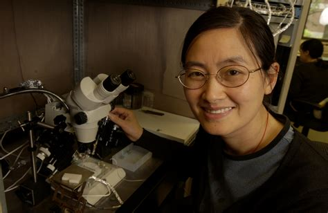 Mba In Entomology by Msu Research May Lead To New Ways To Honeybee