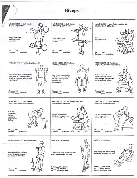 list of bicep workouts most popular workout programs