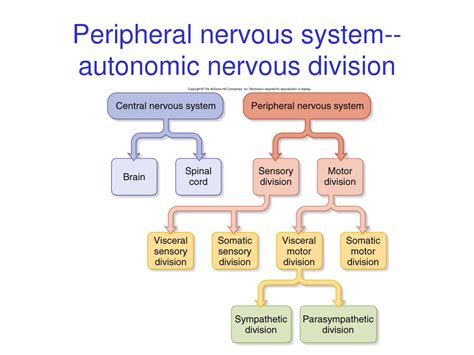 section 35 3 divisions of the nervous system ch9 nerv syst 1 at washtenaw community college studyblue