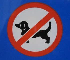 divieto d ingresso ai cani annullate le ordinanze comunali contro l ingresso dei cani