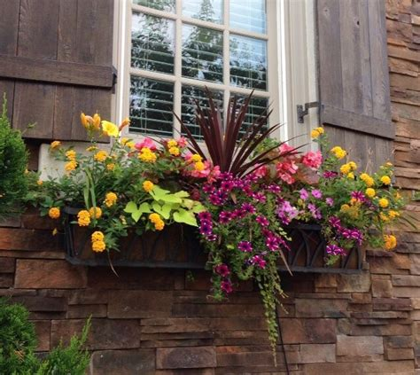 flowers for window boxes in sun 25 best ideas about window boxes summer on