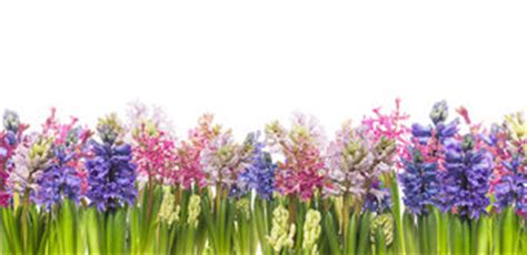 Vase With Feathers Hyacinths Flowers Against Blue Sky Banner Stock Photo