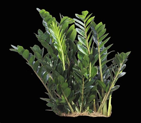 tropical foliage plants tropical plantscaping air strength tropical plants