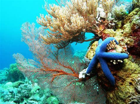 Serunya Snorkeling dan Diving Di Pulau Selayar