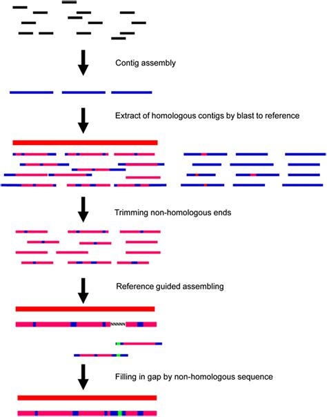 whole genome sequencing illumina frontiers sequencing of chloroplast genome using whole