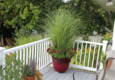 Best Ornamental Grasses for Containers   Growing