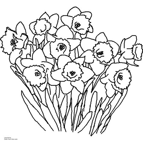 printable spring coloring pages for adults daffodil spring flower coloring page