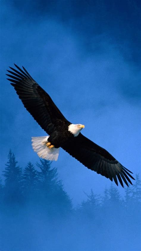 wallpaper for iphone 5 eagle flight of freedom bald eagle iphone 5s wallpaper download