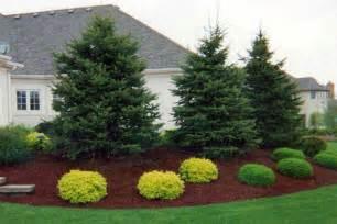 Landscape Ideas Using Evergreens Beautiful Landscaping With Evergreens Small Evergreen