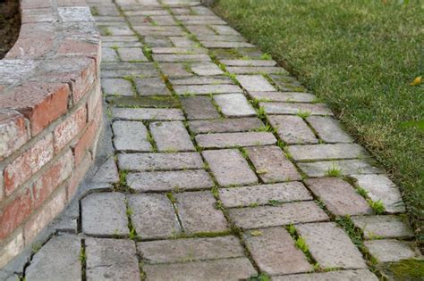 how to remove mold algae from brick pavers with