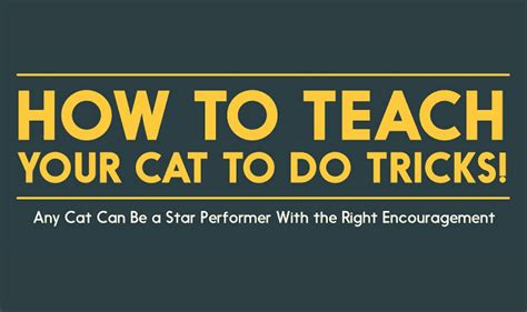 how to your to do cool tricks how to teach your cat to do tricks infographic visualistan
