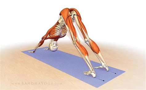 and shoulders for dogs stabilizing your shoulders in downward dr and chris macivor