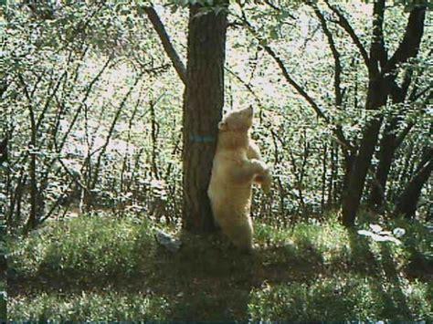 ufficio sta provincia trento foto l orso bianco trentino 1 di 5 repubblica it
