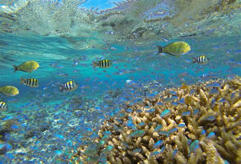 bali photo   day scuba diving  bali snorkeling