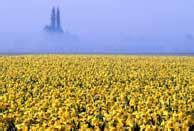 cassetto previdenziale aziende agricole benvenuti nel sito ufficiale di eracle