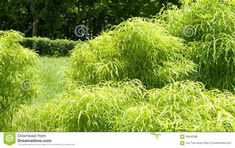 green foliage outdoor plants green plants in the garden stock photo image 59640368