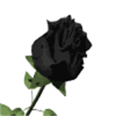 imagenes gif rosas rojas gifs de rosas rojas y negras