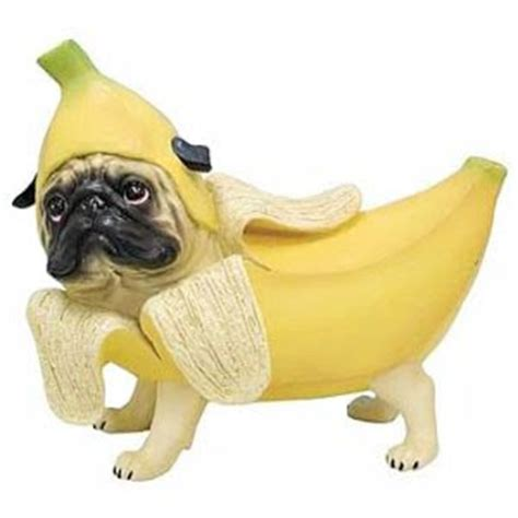 pugs dressed as things the daily puglet banana pug the sequel