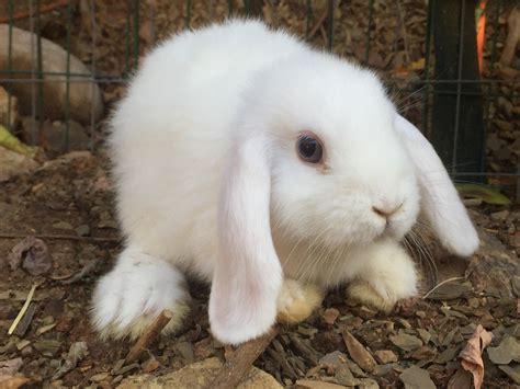 coniglietti nani alimentazione alimentazione dei conigli 28 images la corretta