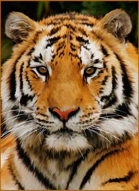 Painting Tiger watercolor tiger related keywords suggestions watercolor tiger keywords