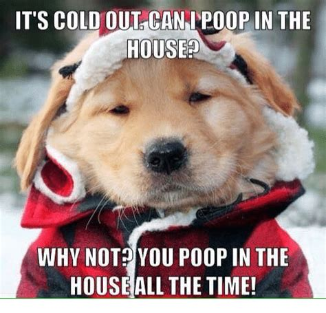 my dog pooped in the house why is my old dog pooping in the house 28 images dog pooping on bed restate co why is my
