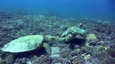 dive lombok dsm dive plong 233 e lombok diving lombok gili