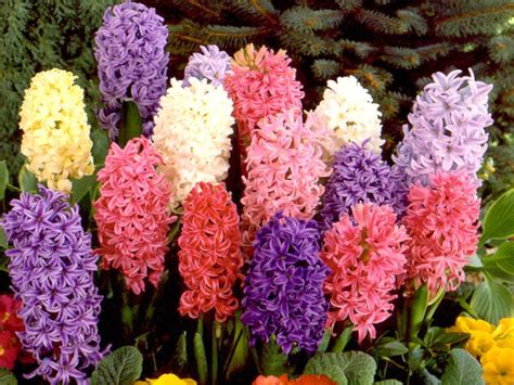 blumenzwiebeln pflanzen zeitpunkt top ideas to plant bulk flower bulbs in landscape home