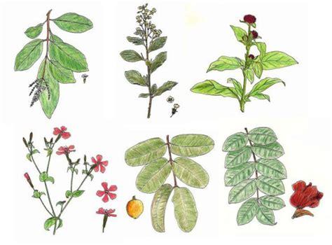 las 10 mejores flores medicinales plantas medicinales tipos de variedades en el per 218