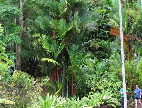 Botanical Gardens In Honolulu Foster Botanical Garden