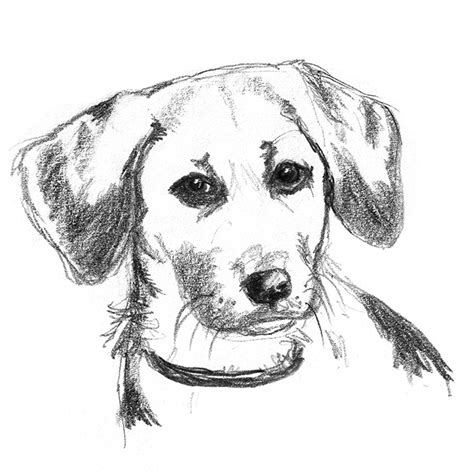 detailed pencil drawings sketches pencil drawings of dogs