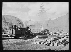 Above ground, below ground, on the ground: CRM in practice ... Logging Camp History