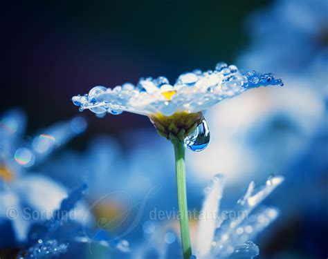 Cincin Water Drop Flower beautiful dreams by sortvind on deviantart