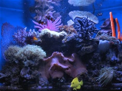 design your own aquarium background make your own aquarium how to diy do it yourself