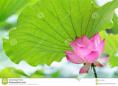 one leaf lotus one leaf lotus theleaf co