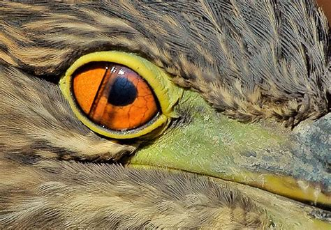 third eyelid the nictitating membrane the third eyelid the ark in space
