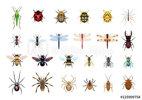 vectordrawing insect bug illustration buy  stock