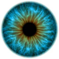 colored eyeball part females distinguish colors better while excel at