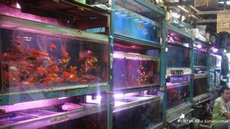 Lu Hias 17 sentra ikan hias cirebon berdiri sejak 1980 1