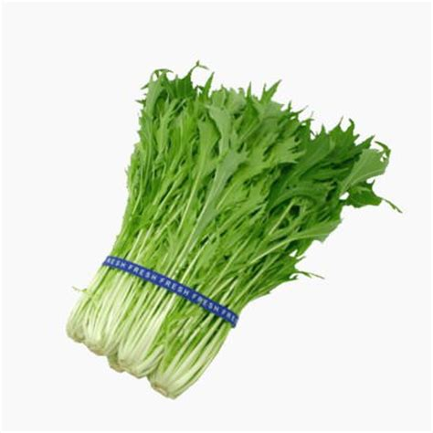 translate palm leaves from english to vietnamese lingua fm translate dietary from english to vietnamese lingua fm