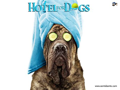 hotel for dogs hotel for dogs wallpaper 6