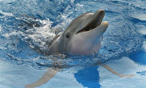imagenes reales de winter el delfin image gallery el delfin