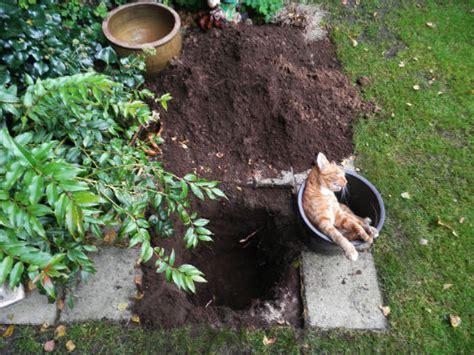 dieren begraven in je tuin geenstijl poezentopic van wie is deze
