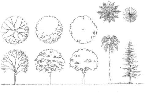 tree architecture drawing sketch challenge week 4 in architecture