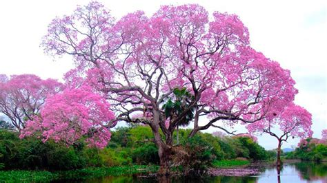 amazing tree 10 stunning trees in the world youtube